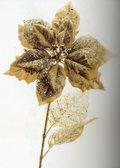 Stella Oro H 72 maculata - Sconti per Fioristi e Aziende