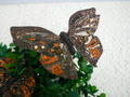 Farfalle x 12 Bronzo  Brillante
