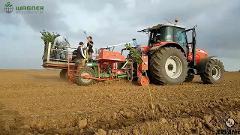 Intervento di piantumazione piante per realizzare impianti di uliveti