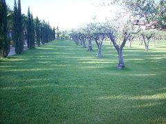 Realizzazione Giardini con Prato-Pronto (Trapani Palermo Agrigento Sicilia) Riventitori Installatori Applicatori PratoPronto